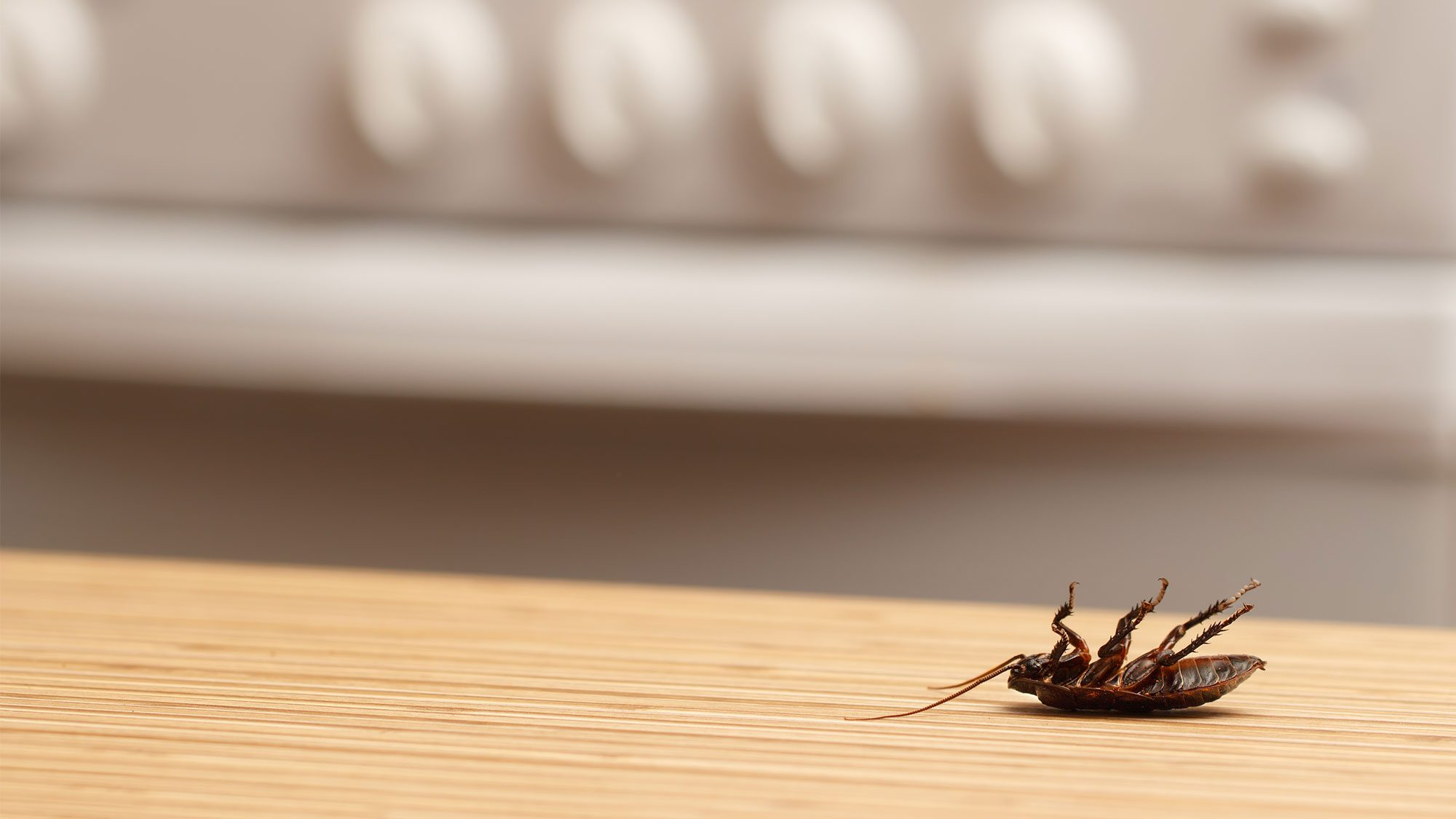 getting-rid-of-roaches