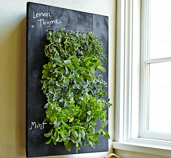 indoor herb garden vertical wall