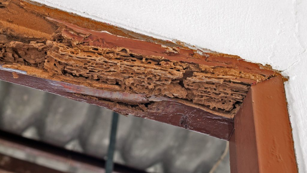 Does Homeowners Insurance Cover Termite Damage  realtorcom