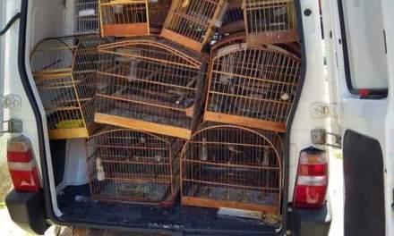 Polícia Civil apreende aves que seriam usadas para rinha em Cachoeirinha