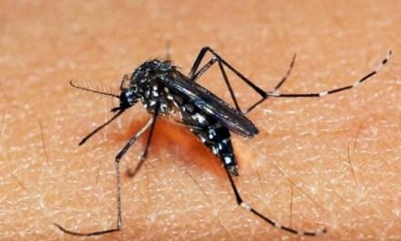 Rio Grande do Sul registra 24 casos de Dengue em 2019