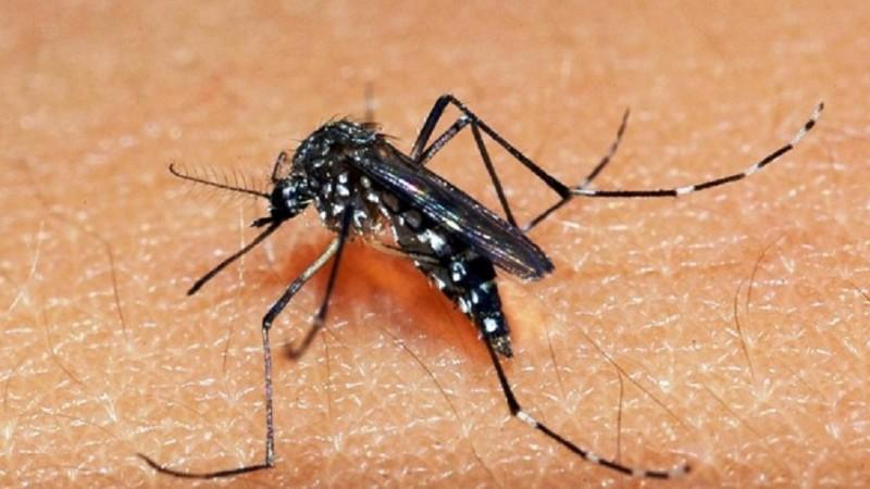 Casos de dengue em Porto Alegre foram destaque no Rio Grande em Movimento