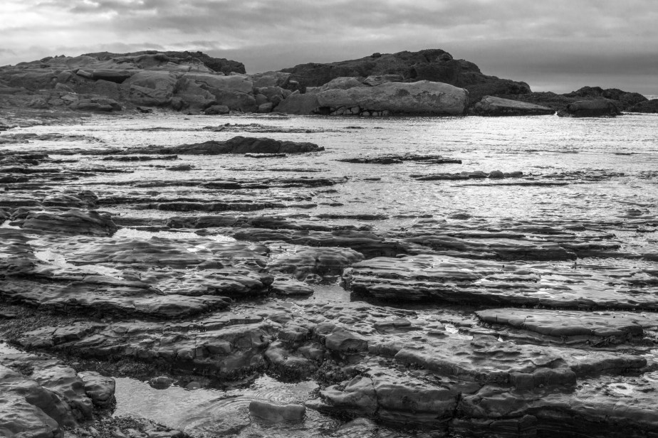 Point Lobos B&W-7663
