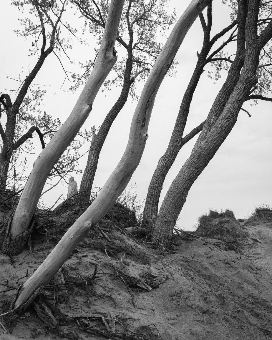 Sleeping Bear Dunes 8439 b+w