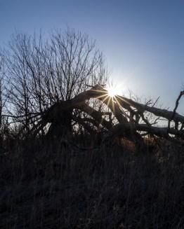 Thorosen Road Sunrise-7088