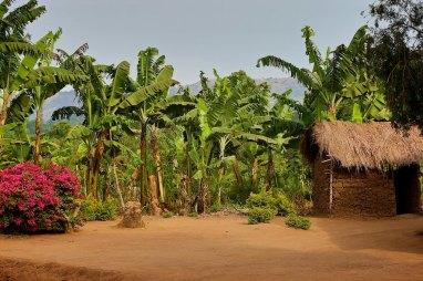 The Uganda countryside 2