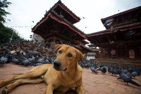 Kathmandu 19