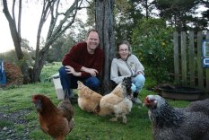 Hanging out with the chickens in Point Arena, California