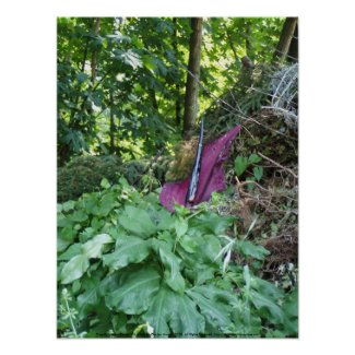 Oregon Passionflower #6