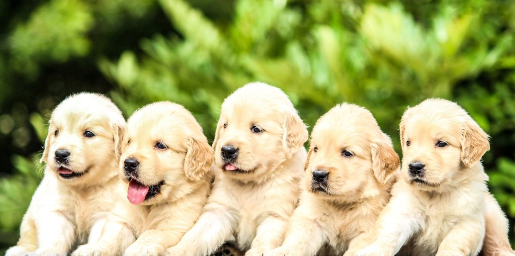 Young Puppies are like those of us early in recovery, starting a community at a sober living.