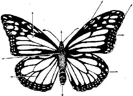 Encuentra aquí información de La Mariposa Monarca para tu