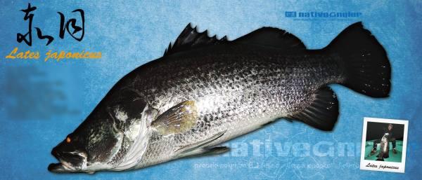 赤目デジタル魚拓