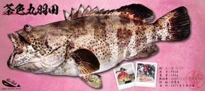 茶色丸羽田-魚拓