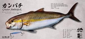 SSFTカンパチ魚拓