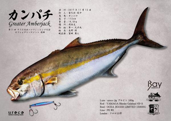 カンパチ魚拓