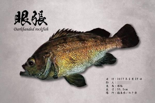 メバル魚拓