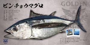 ビンチョウマグロ魚拓