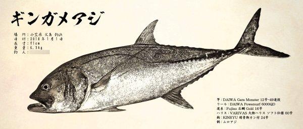 ギンガメアジ魚拓