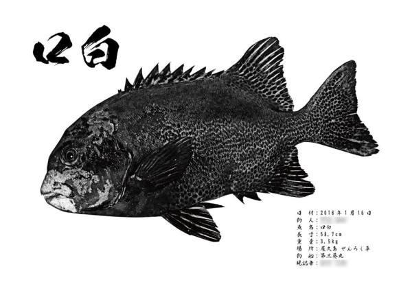 クチジロ魚拓