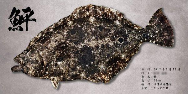 ヒラメ魚拓