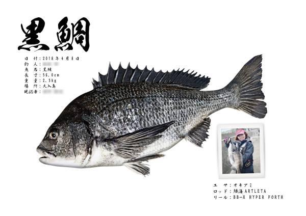 黒鯛-魚拓