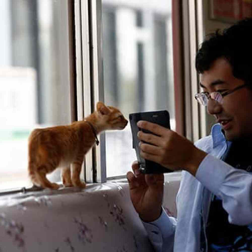 cats-on-train-japan-reuters_650x400_41505035215