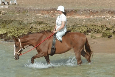 healing with horses May 9 3