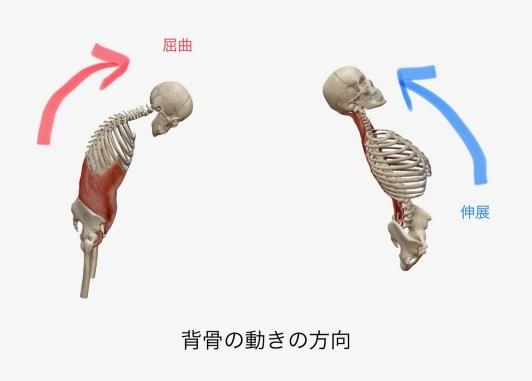 伸展と屈曲