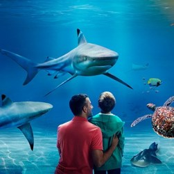 SEA LIFE London Review