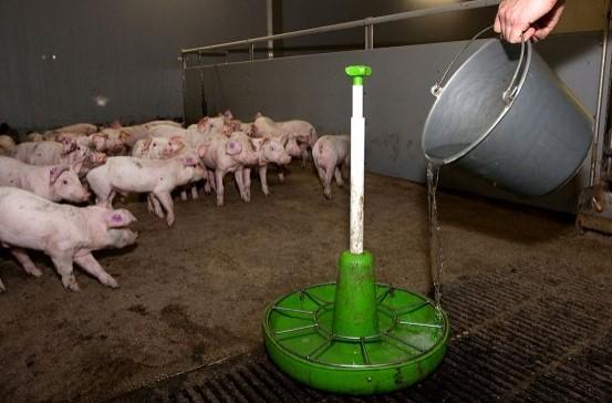 Argentina: no más colistina en productos veterinarios