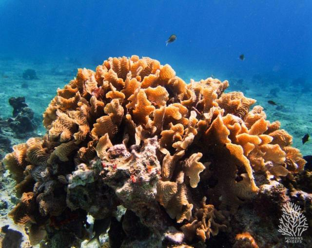 corales_humans4reefs_luvit_agua_2