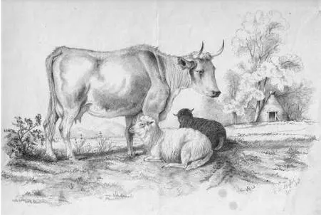 Cow and Calfs
