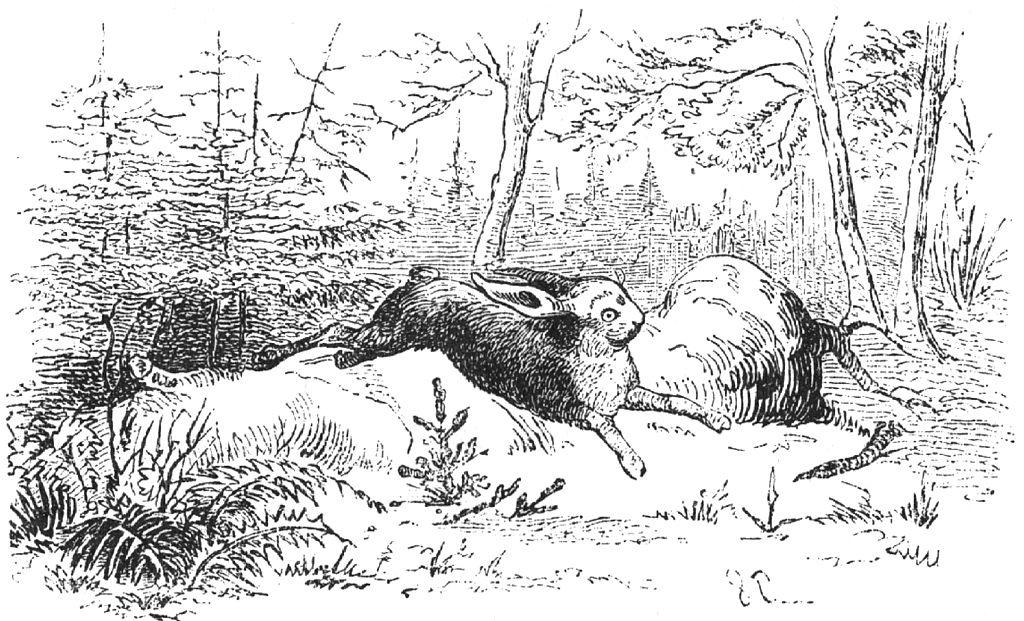 the fir tree illustration by Vilhelm Pedersen