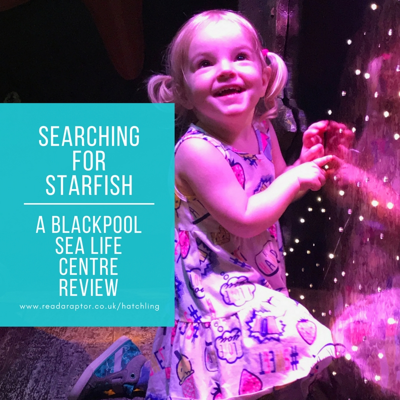Searching for Starfish Blackpool Sea Life Centre Review-2-readaraptor-hatchling