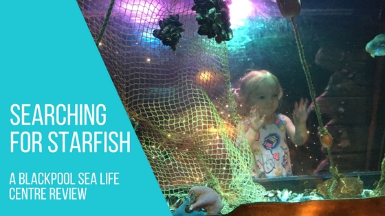searching for starfish blackpool sea life centre review blog title readaraptor hatchling