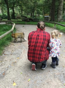 Spike getting close to the monkeys at Trentham Monkey Forest where we stopped over on our journey home