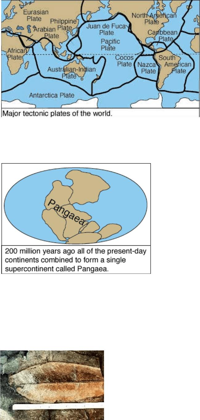 Lempeng Antartika : lempeng, antartika, Lempeng, Tektonik, Continental, Drift