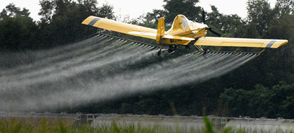 A crop-dusting plane from Palmer Aviation Services sprays a field of corn north of Manito, Ill., in July 2011. The approval of genetically engineered crops that are resistant to 2,4-D would lead to increased use of the toxic herbicide.
