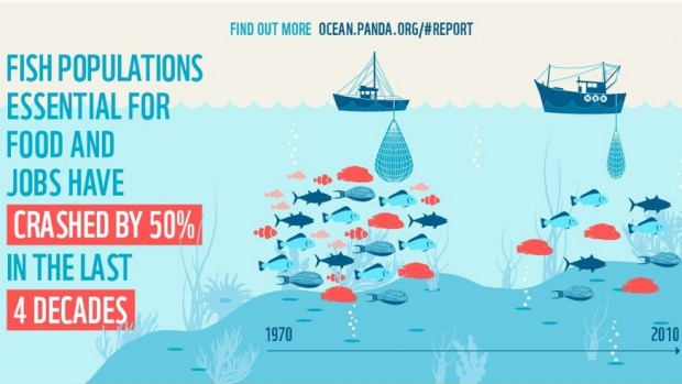 A scale of the decline in marine life from 1970 to 2010. (photo: WWF)