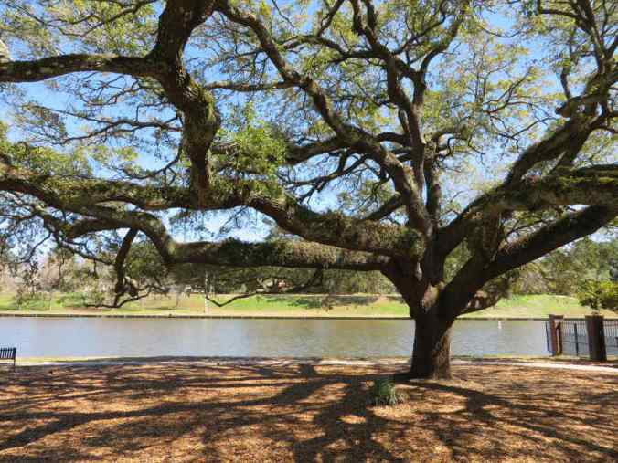 Picture of live oak tree on the bank of the Cane River. Classic literature is like this beautiful Live Oak tree in Natchitoches, Louisiana: it lasts for hundreds of years, growing in beauty and complexity every time someone regards it.