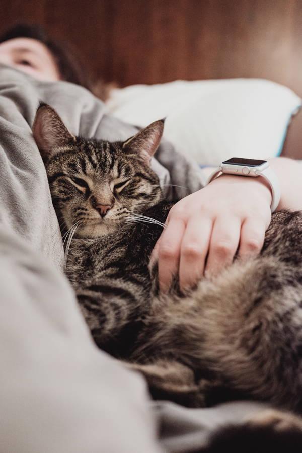 Pet cat sleeping on man's lap.