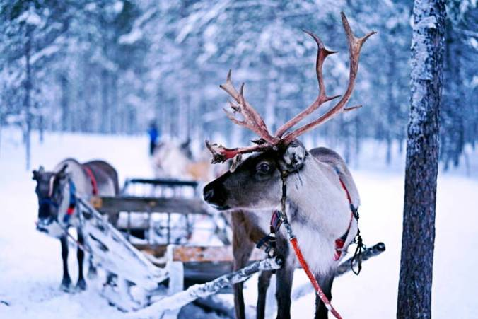Lonely reindeer in the snow hitched to a wagon, another deer hitched behind, sign of a quiet Christmas