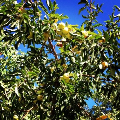 Fall Apple Picking 2