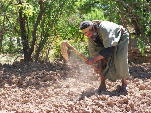 Bible Times Farmer