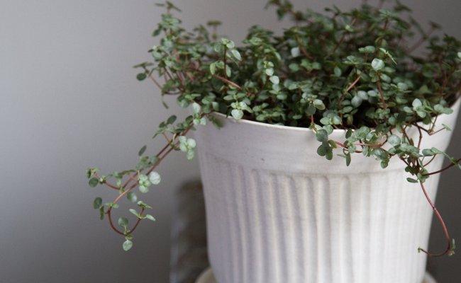 Tiny Houseplants Reading My Tea Leaves Slow Simple