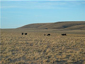 Rangeland, Navajo Nation
