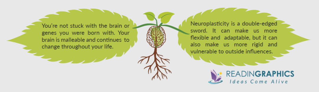 The Brain that Changes Itself summary - Overview