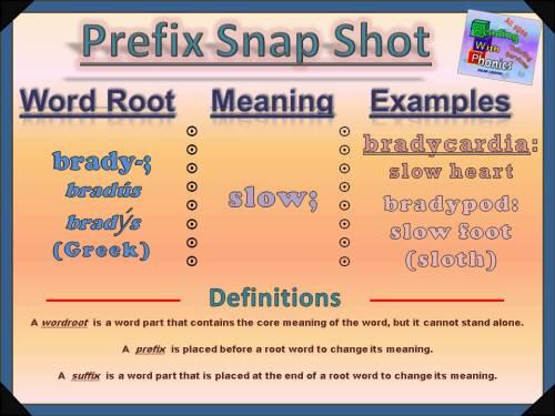 brady-prefix-snap-shot