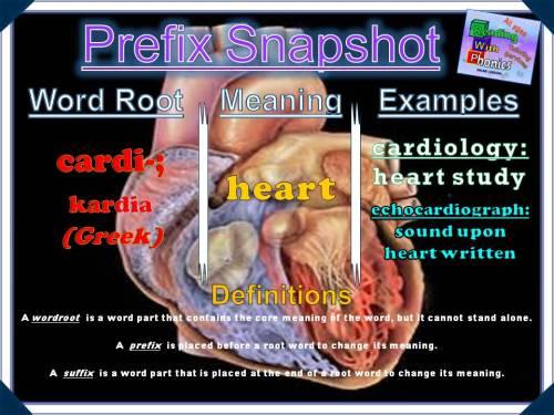 cardi-prefix-snapshot