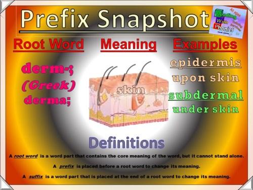 derm- Prefix Snapshot